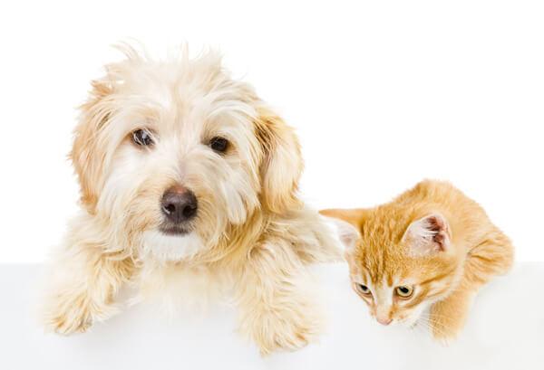 Pet Medication - Tuscawilla Animal Hospital