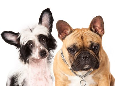 How to train a dog to walk on a leash without pulling? A blog article by Tuscawilla Animal Hospital