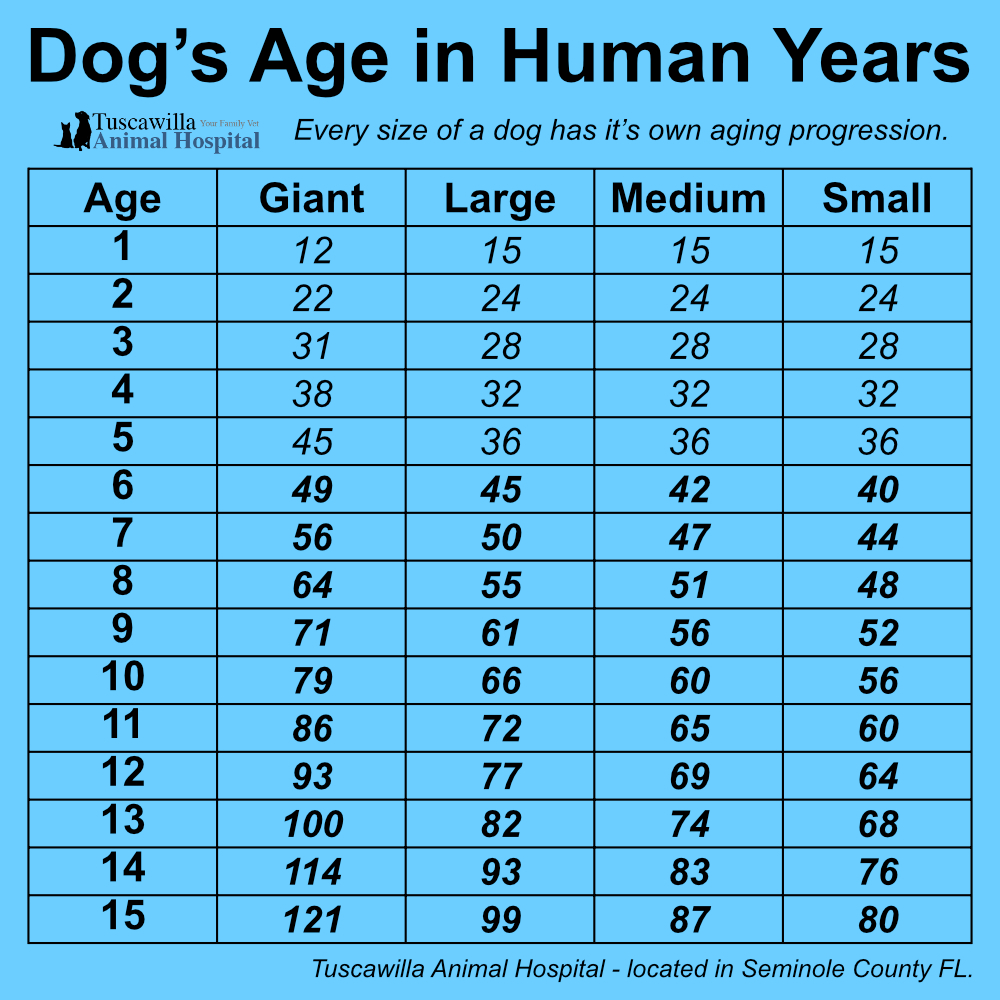 How is my dog in human years? Tucsawilla Animal Hospital - Seminole County Florida Vet Clinic