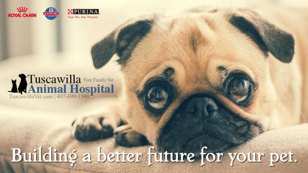 Is My Dog Brachycephalic? Tuscawilla Animal Hospital