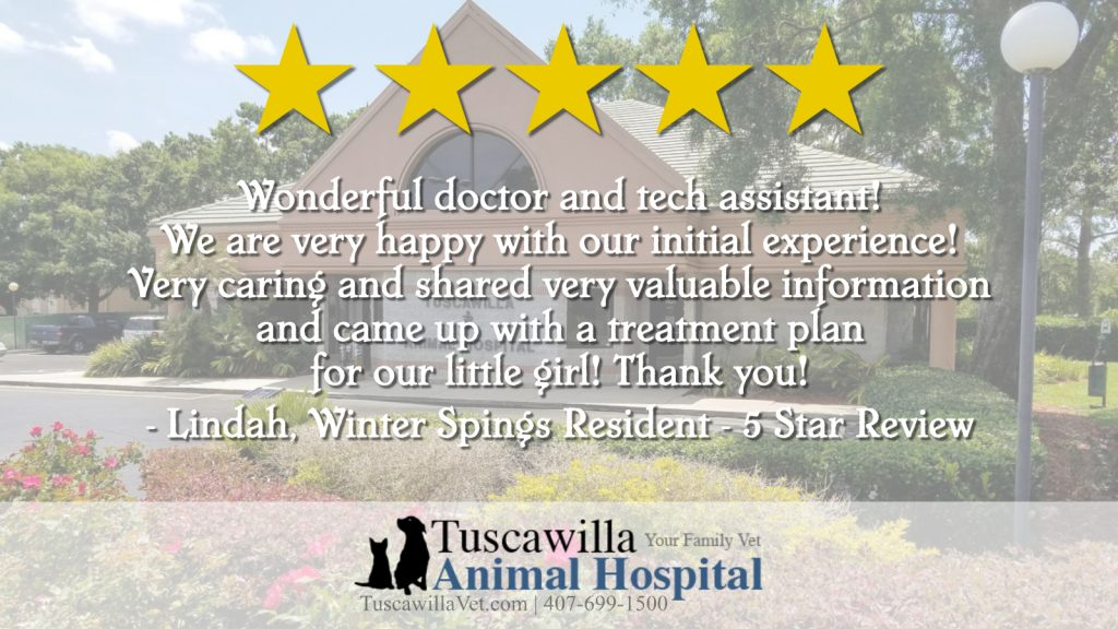Why Is Adopting A Rescue Dog The Best Decision You Could Ever Make? - 5-star review for Tuskawilla Animal Hospital